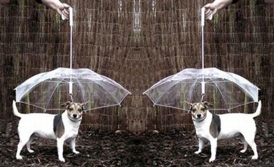 dogumbrella