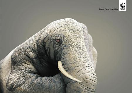 wildlife-hand