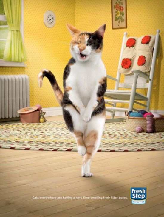 fresh-step-cross-legged-cats