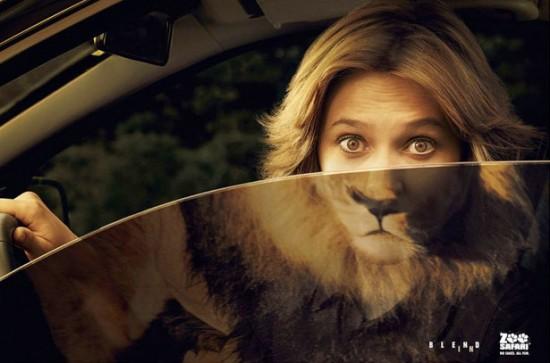 lion-zoo-safari
