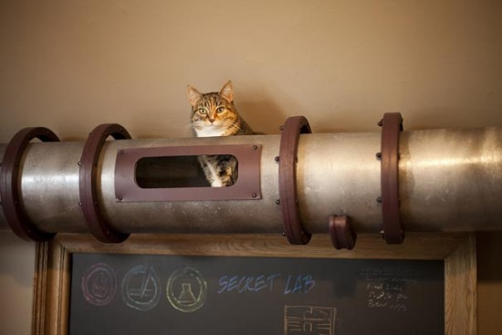cat-transit-system-5