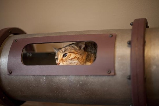 cat-transit-system-6