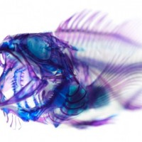A arte dos peixes fluorescentes de Iori Tomita