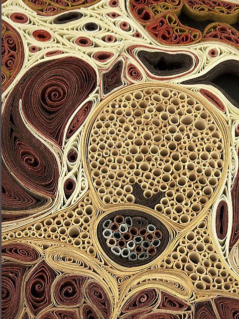 TissueIllustration1