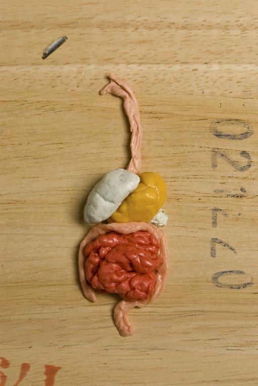 digestive-web