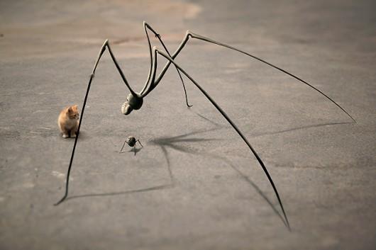 aranhaestranha