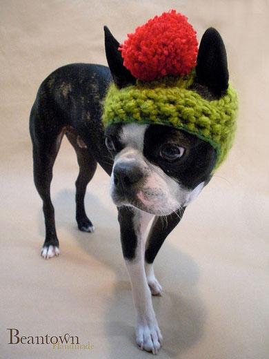 dog_hat_glasses_1