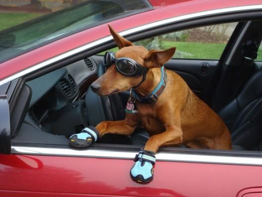 dog_hat_glasses_10