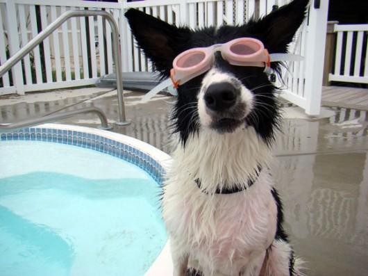 dog_hat_glasses_11