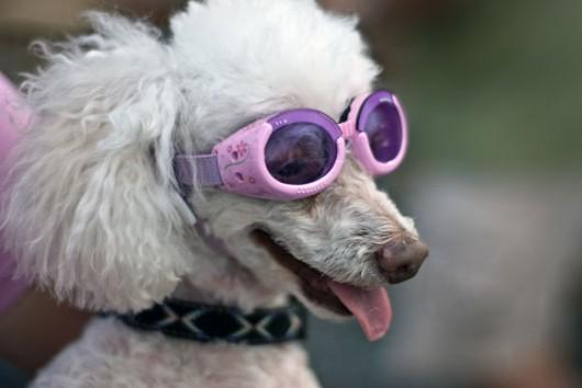 dog_hat_glasses_12