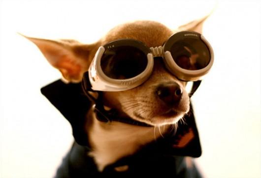 dog_hat_glasses_14