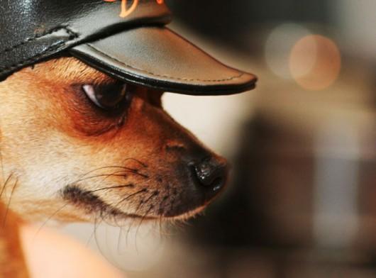 dog_hat_glasses_17