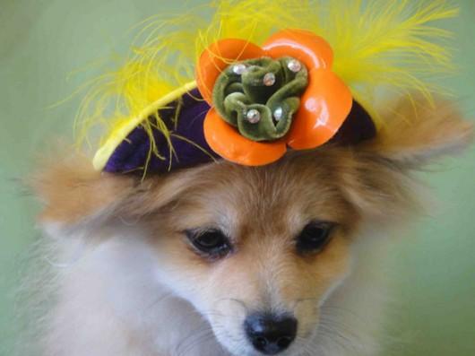dog_hat_glasses_5a