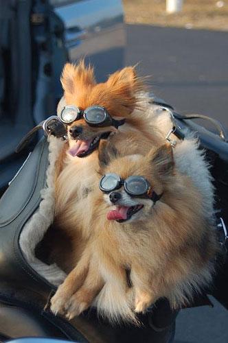 dog_hat_glasses_7