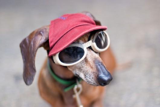 dog_hat_glasses_9
