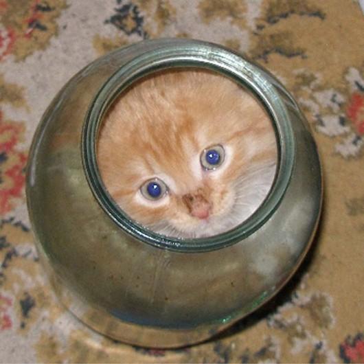 funny-liquid-cats-11