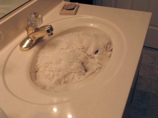 funny-liquid-cats-4