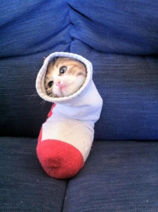 funny-liquid-cats-5