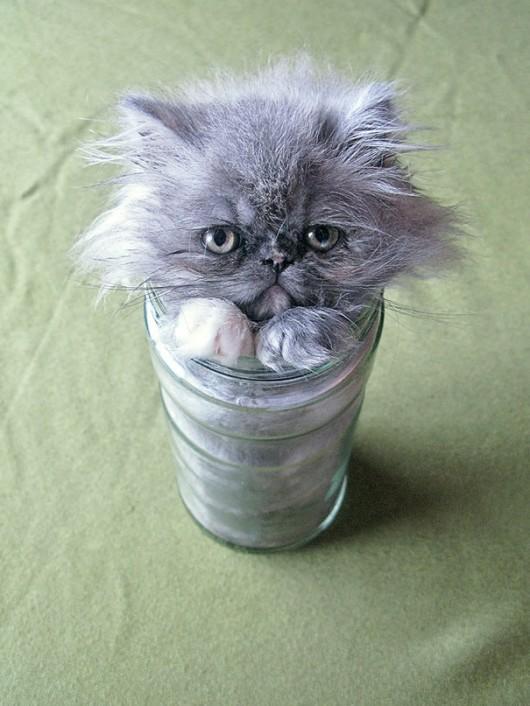 funny-liquid-cats-6