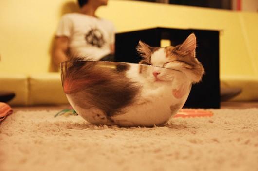 funny-liquid-cats-7