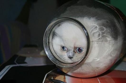 funny-liquid-cats-8