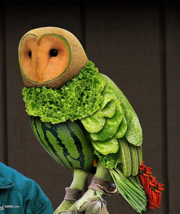 1-healthy-owl-photo-manipulation-by-romolina