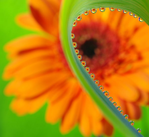 21-flower-reflection-photography