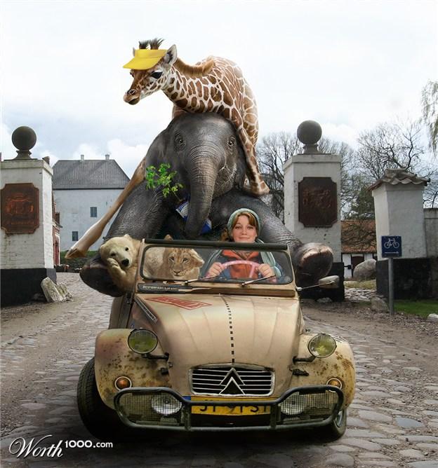25-animals-sitting-car-elephant-photo-manipulation