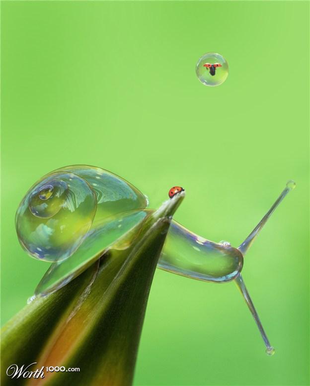 4-water-snail-photo-manipulation-by-brunosousa