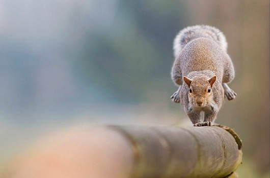 The-vertical-by-Stefano-Ronchi-530x351