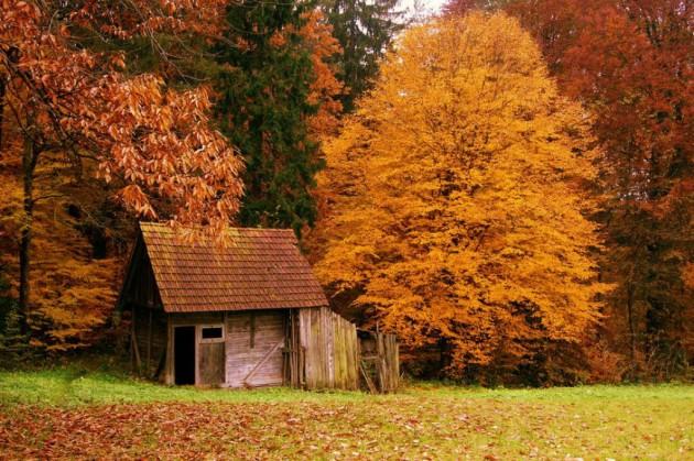 casa_floresta_02