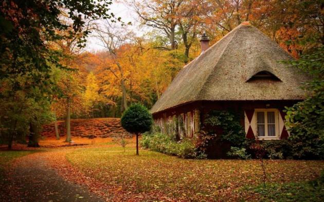 casa_floresta_03