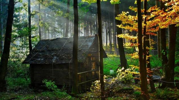 20 incr veis casas no meio da floresta - Casitas en el bosque ...