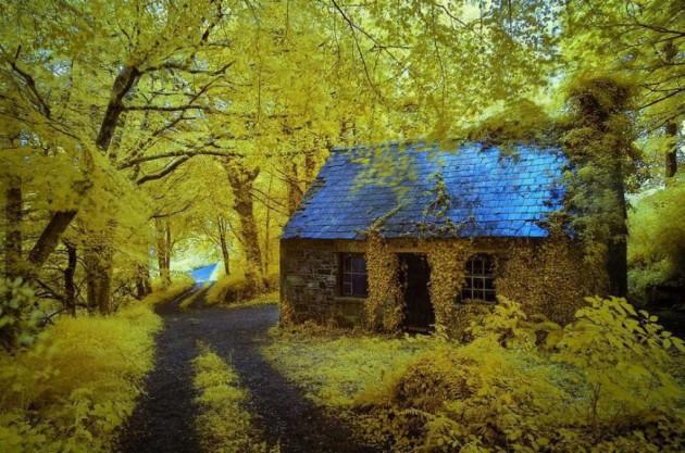 casa_floresta_06