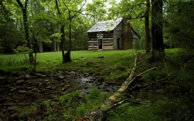 casa_floresta_11
