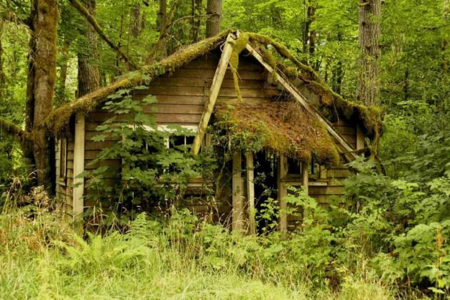 casa_floresta_15