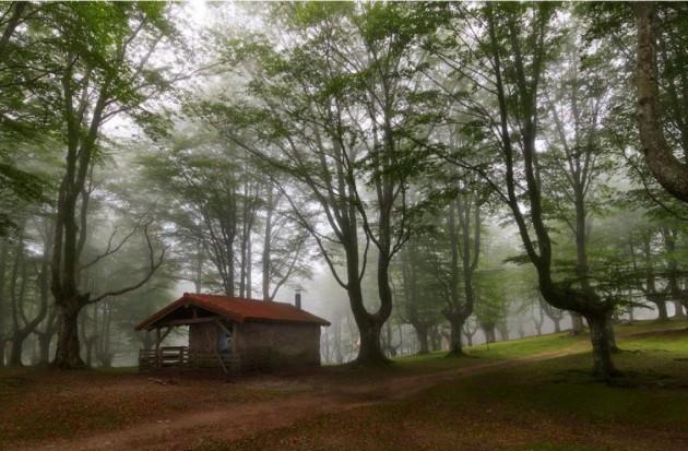 casa_floresta_16
