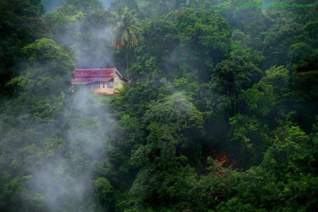 casa_floresta_19