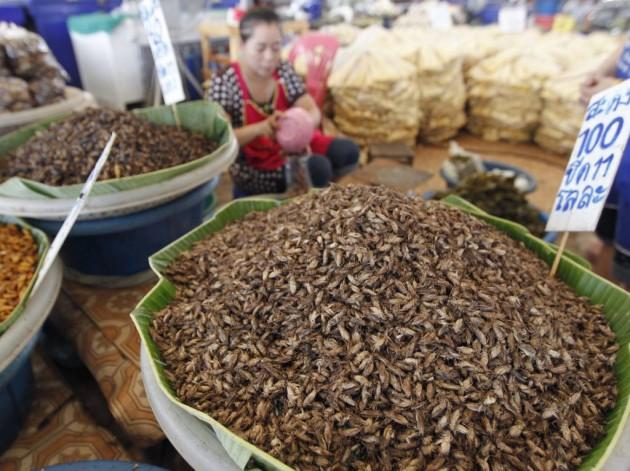 china_gourmet_insetos_36