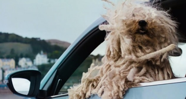 cute-new-ad-shows-there-s-a-volkswagen-for-every-dog-video-69266-7