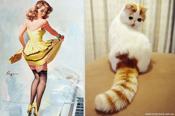 cats-that-look-like-pin-up-girls-12__605