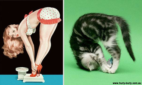 cats-that-look-like-pin-up-girls-16__605
