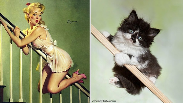 cats-that-look-like-pin-up-girls-201