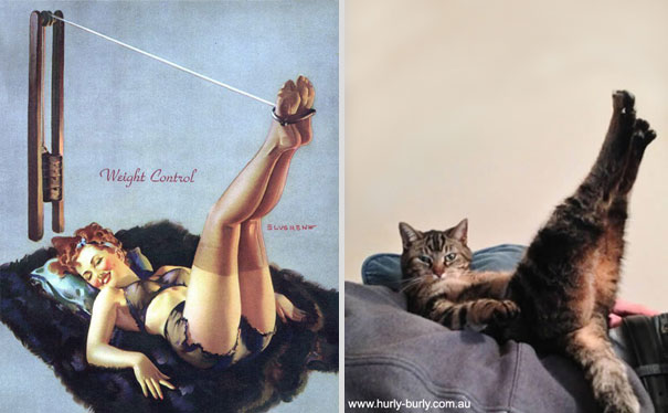 cats-that-look-like-pin-up-girls-7__605