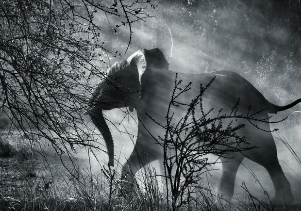 sebastiao-salgado-elefante-fotografo-paraiso