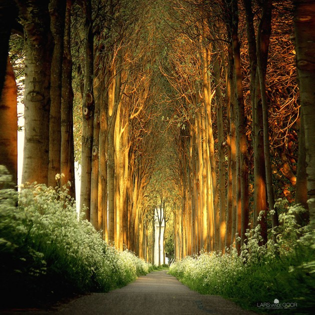 Tree Tunnel in Netherlands
