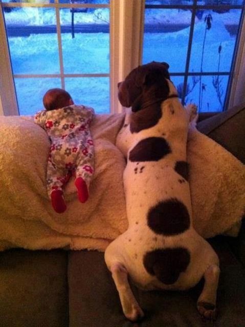 babies-need-pets-19