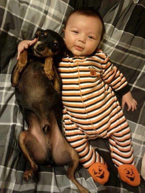 babies-need-pets-20