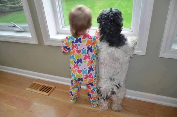 babies-need-pets-22