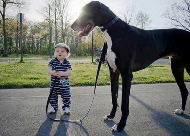 babies-need-pets-3